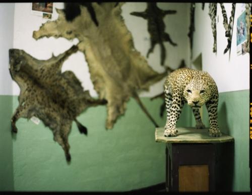 wild-life, ethiopia